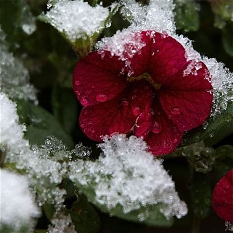 8 tips for fall and winter container gardening 8 tips for fall and winter container gardening