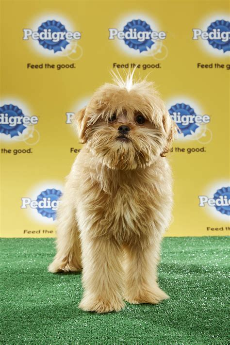 puppy bowl 2017 highlights puppy bowl 2017 starting lineups are of great dogs sbnation