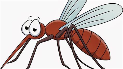 fakta nyamuk negara tropis  kerap ganggu tidurmu