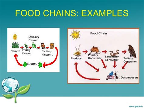 food chain examples pictures to pin on pinterest tattooskid