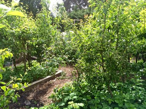 Deer Bed What Is Permaculture