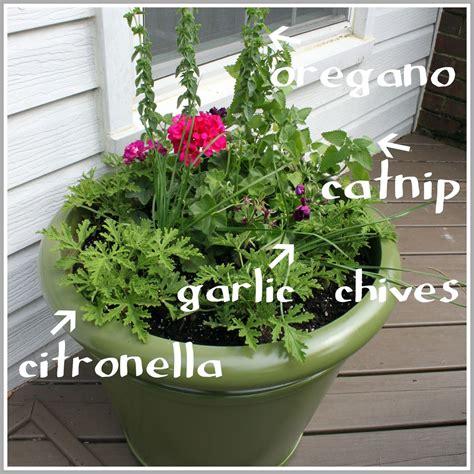 mosquito planter