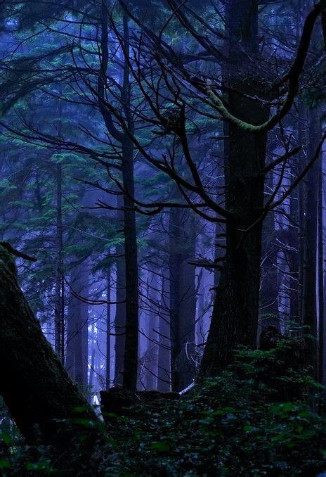 rainforest night magic  fort photo  flickr forest