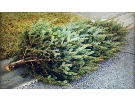 christmas tree dropoff is open and pickup is available