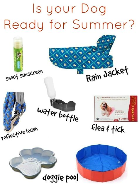 what does puppy must summer survival items for dogs how was your day
