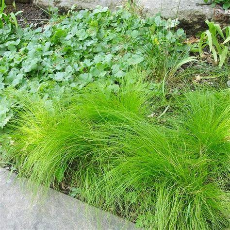 new shade loving perennial varieties for 2013 gardens