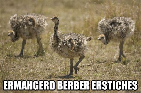 Ostrich Meme - funny baby animal pictures with captions funny images