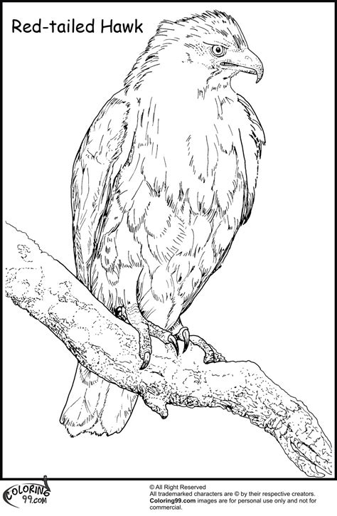 hawk coloring pages team colors