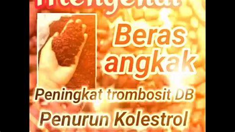 Teh Clup Angkak Mengatasi Dbd Dan Kolestrol mengenal beras angkak peningkat trombosit dbd penurn kolestrol dan tekanan darah