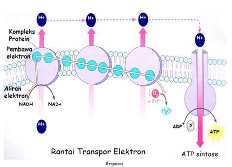 Biologi Edisi Kedelapan Jld 2 biologi berbagi perolehan energi pada sel