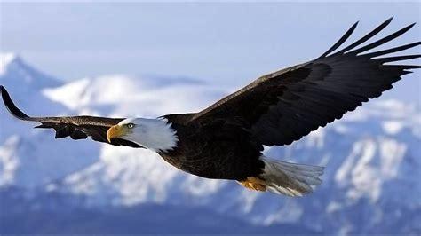 Birds Top top 10 highest flying birds in the world