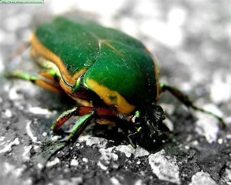 imagenes animados de insectos megapost fotografias de insectos hd taringa