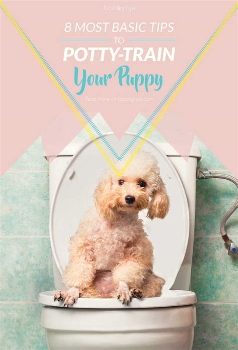 potty a puppy 8 basic tips for potty a puppy