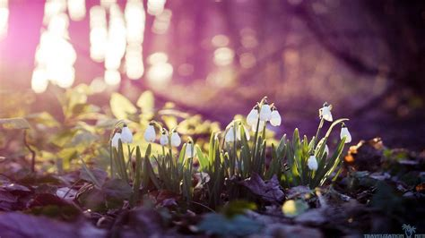 free wallpaper early spring early spring wallpapers wallpaper cave