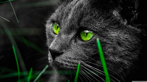 wallpaper cat green photo collection 4k wallpaper black and green