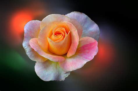 imagenes flores mas bonitas mundo banco de im 193 genes las flores m 225 s hermosas del mundo 18