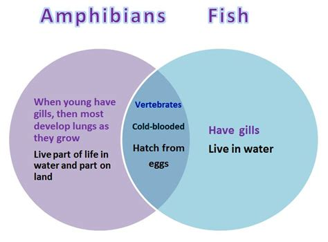 venn diagram of reptiles and hibians venn diagram reptiles and hibians different types of