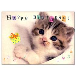 ashiya hori mansho do rakuten global market birthday card cat b48 041 science lab staffing