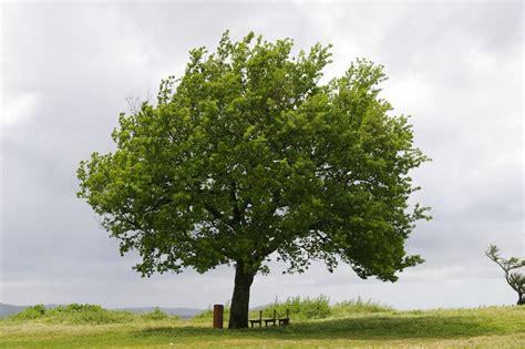 l albero a cui tendevi panoramio photo of l albero a cui tendevi