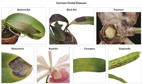diseases that affect plants diseases