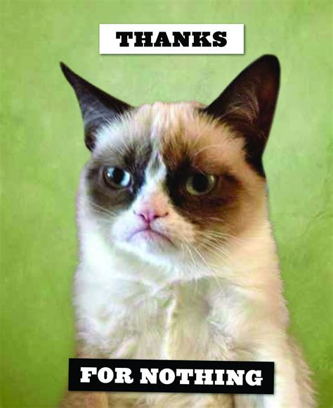 Grumpy Cat Wedding Meme - birthday cat memes cats on the internet greeting card