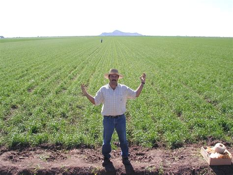 Farmer S | nitrogen rich strips predicting the potential response to