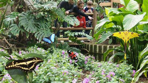 casa delle farfalle la casa delle farfalle di bordano