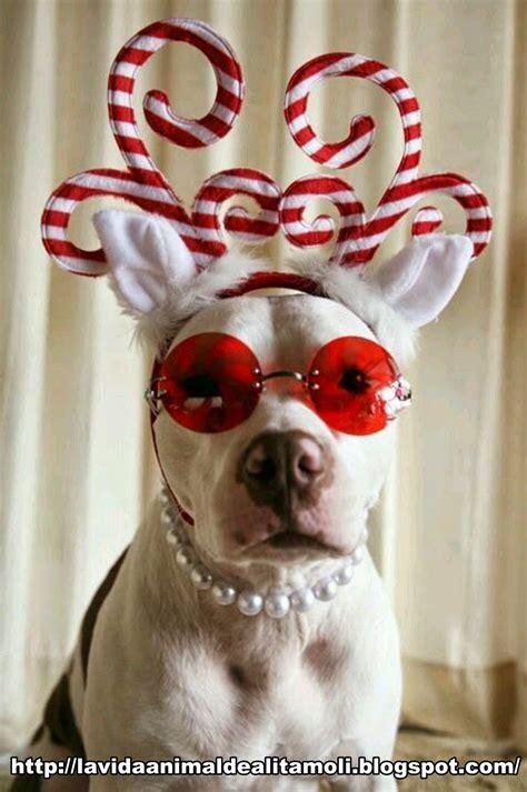 Merry Christmas Dog Meme