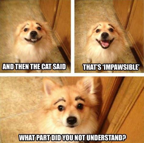 puppy puns jokes