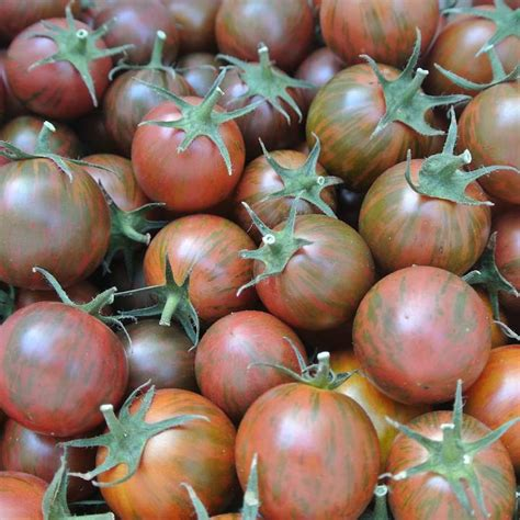 Tomato Purple Seeds tomato purple bumble bee organic adaptive seeds
