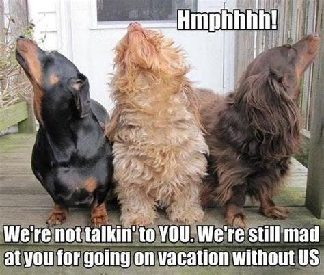 Cold Shoulder Meme - awwww the post vacation cold shoulder after tail wags