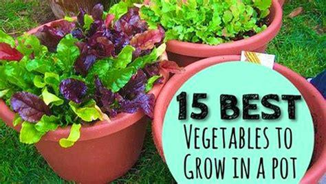 vegetables  grow   pot gardengal bevy