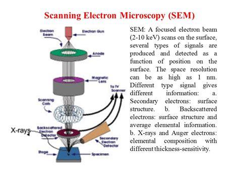 sem scanning electron microscopy and edx laboratory wadia