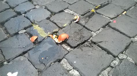 decreto casa approvato il decreto casa lancio di uova e arance contro