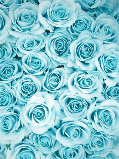 blue wallpaper pink roses 17 best images about flowers blue on pinterest gardens