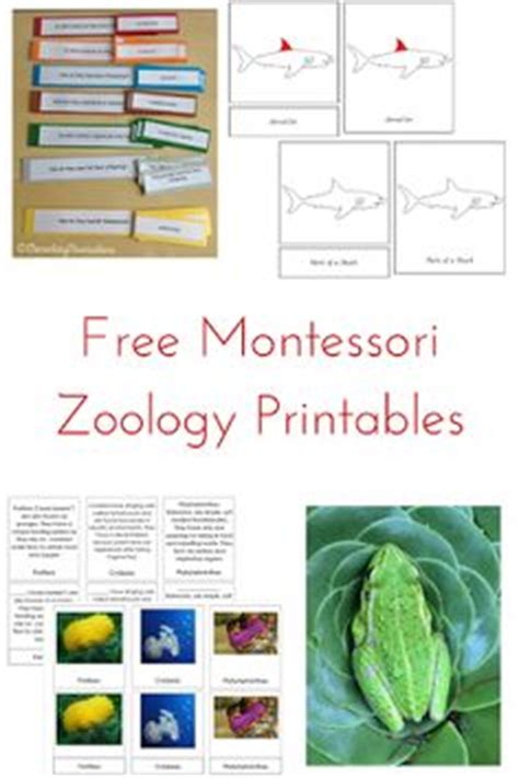 free printable montessori geography materials animals of africa information cards printable