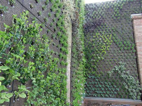 piante per giardino verticale piante per giardini verticali dragtime for