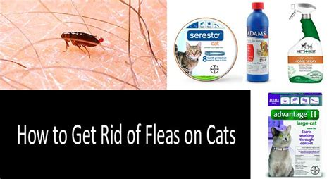 how to get rid of cats in your backyard best flea treatments for cats top 8 drops pills sprays