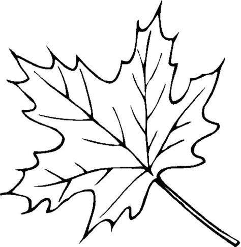 christmas leaf coloring pages 20 best leaves coloring pages images on pinterest kids
