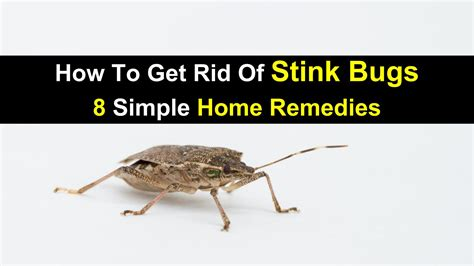 how to get rid of bees in backyard how to get rid of bees in backyard 100 how to get rid of wasps in backyard um today