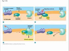 G Protein Coupled Receptor Structure Activation download ... G Protein Coupled Receptors Diagram
