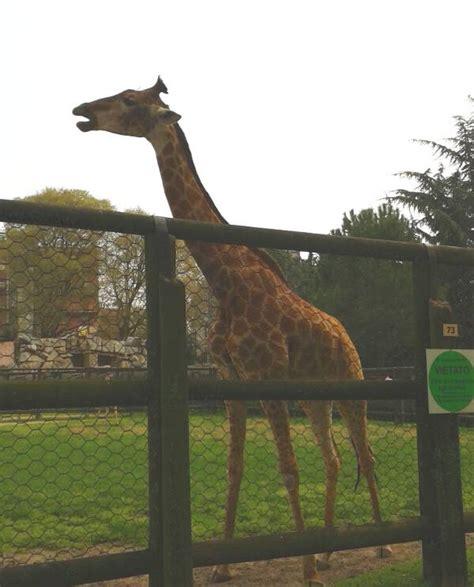 costo ingresso parco delle cornelle parco faunistico le cornelle animali da tutto il mondo