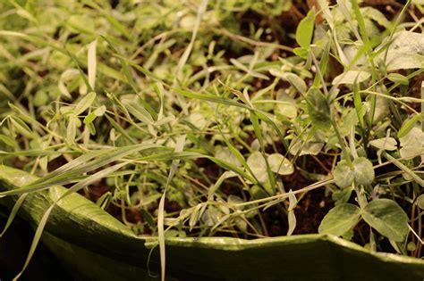 engrais plante d int rieur permaculture d int 233 rieur le no till gardening culture