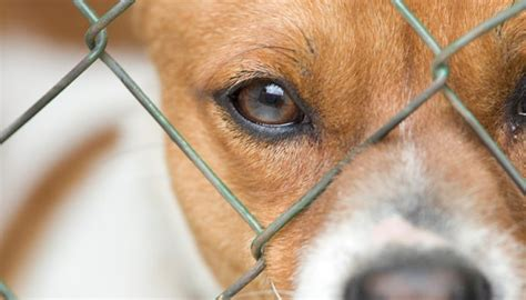 8 Reasons I Animals by Animal Abandonment The 1 Reason Why Give Up Pets