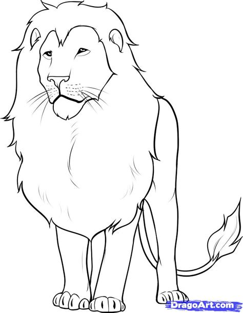 simple lion coloring page step 13 how to draw a lion