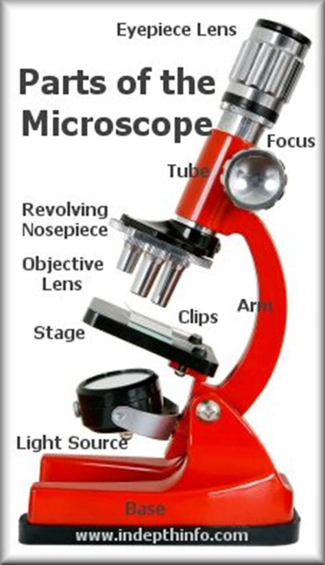 light source microscope function parts of a microscope eyepiece stage light source
