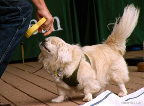 paws for a cause friendly fundraiser at l l bean