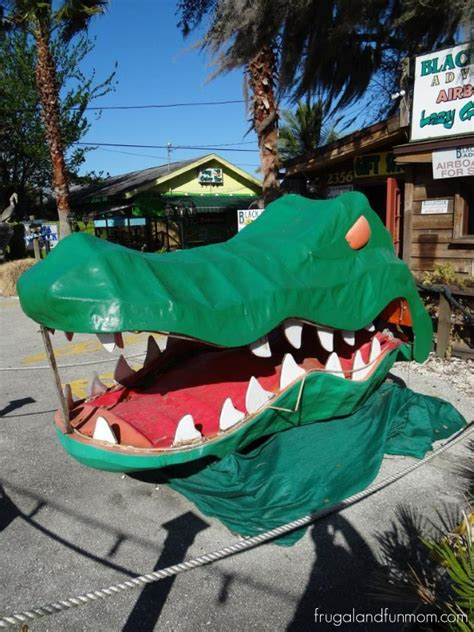 gator boat rides near me taking a ride at black hammock airboat adventures