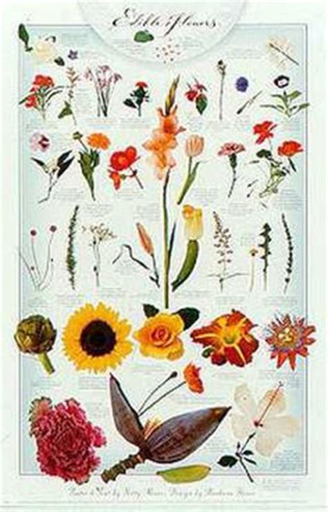 printable list of edible flowers 1000 images about edible flowers on pinterest edible