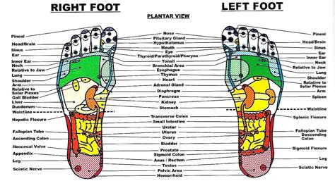 reflexology diagram reflexology
